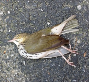 Who is responsible for this death? - Photo by Jan Ketchel
