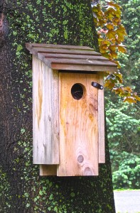 Occupy bluebird box! - Photo by Jan Ketchel