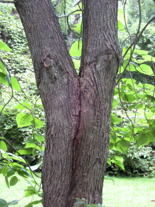 What do you see? I see two tree spirits passionately kissing! - Photo by Jan Ketchel