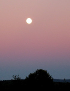 Wednesday evening's Harvest Moon rising over the neighborhood... - Photo by Jan Ketchel