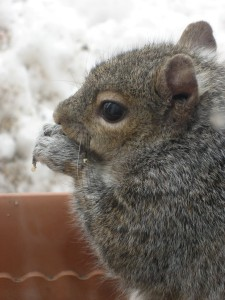 The machinations of the mind are like the squirrel's incessant chewing... - Photo by Jan Ketchel