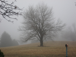 Fog is depressing. That's a thought that has power. - Photo by Jan Ketchel